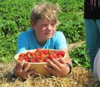 erdbeeren-6