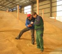 Getreideprüfung