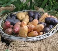 kartoffelkorb