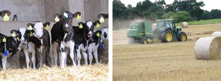 Rinderzucht Ackerbau