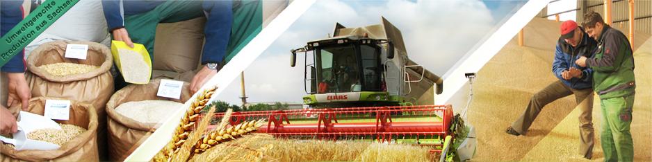 Getreide & Feldfrüchte
