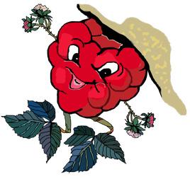 himbeer-logo