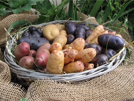Gospersgrüner Kartoffeln