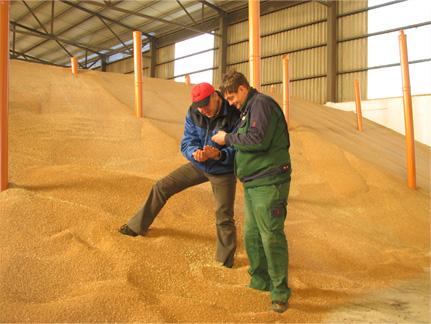Überprüfung der Getreideernte