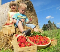 erdbeeren-1