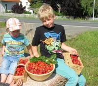erdbeeren-5