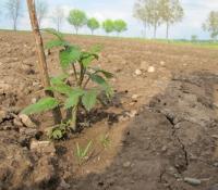 neugepflanzte Sträucher