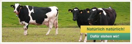 Tierproduktion Kühe Rinder Fraureuth Sachsen