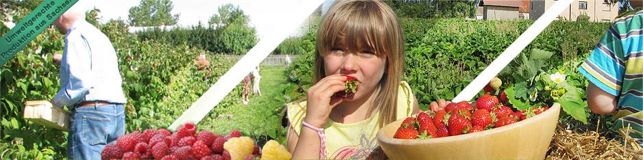 Beeren zum Selbstpflücken